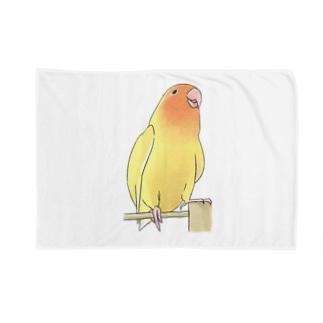 得意げ可愛い コザクラインコちゃん【まめるりはことり】 Blankets