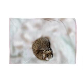 膝で寝るネコ Blankets