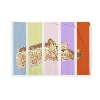 はじめまして ちいさいひと Blankets