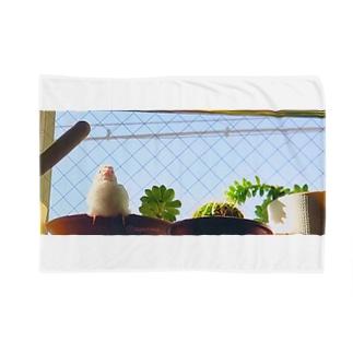 松砂丸商店の白文鳥のチマフミ Blankets