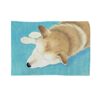 柴犬『コミュニケーション』 Blankets