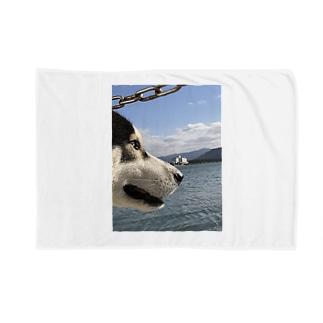 海を見るハスキー Blankets