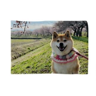 ハナちゃんと桜 Blankets