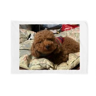 うちの愛犬かずま Blankets