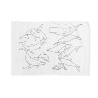 あなたの好きなイルカはなんですか? Blankets
