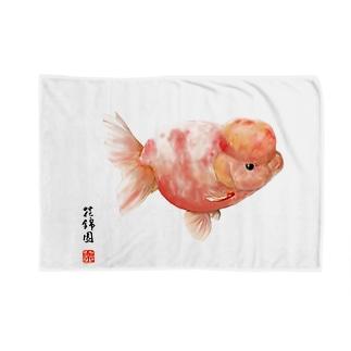 【金魚】桜錦~ひとひら舞いて・・~ Blankets