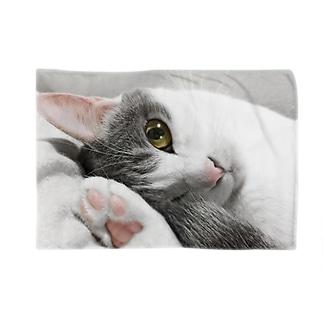 まどろみ猫 ブランケット