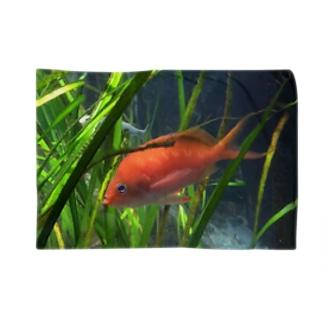 赤い魚 ブランケット