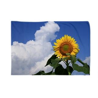 夏の風物詩 Blankets
