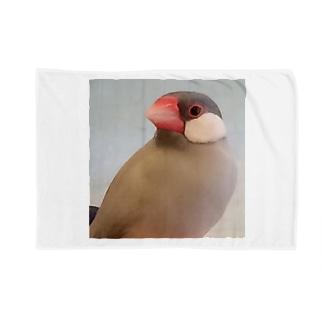 文鳥のちゅんさん Blankets