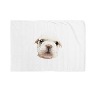 フレンチブルドッグA 子犬 Blankets