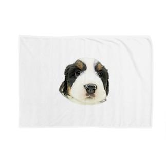 バーニーズマウンテンドッグA 子犬 Blankets