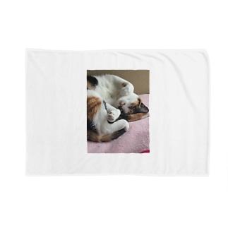 愛猫モモ Blanket