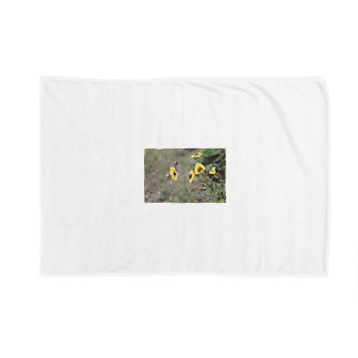 ishiue_hikoのなついろ Blankets