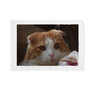 興味津々 Blankets