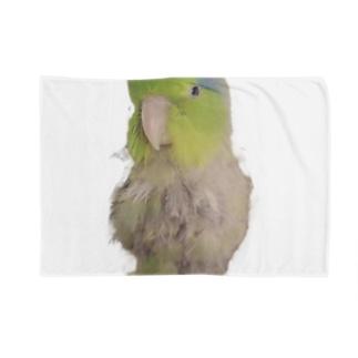 マメルリハのまめぞう Blankets