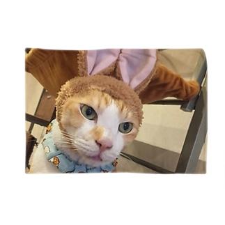 あかめ@猫カフェの猫縁~ねこえん~代表 Blankets