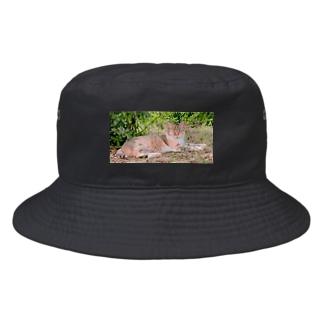 猫 Bucket Hat