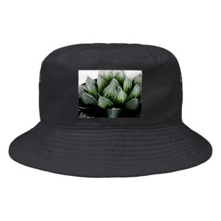 ハオルチア オブツーサ系3「ブルーレンズ」 Bucket Hat