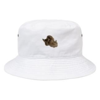 海老太郎のトイプードルのくぅちゃんです Bucket Hat