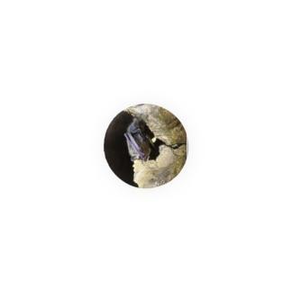 小さなネズミのテングコウモリ Badge