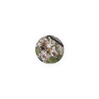 春の桜 Badges