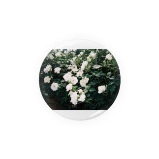 白いばら / white rose Badges