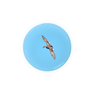 オカヨシガモ♂の翼 Badges