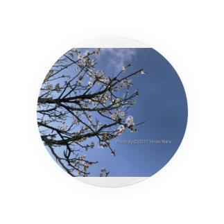 光景 sight738 梅  花 FLOWERS 缶バッジ