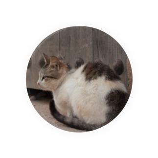 モロッコの猫 Badges