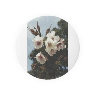 Sakura Badges