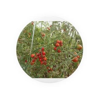 ミニトマト収穫前 Badges