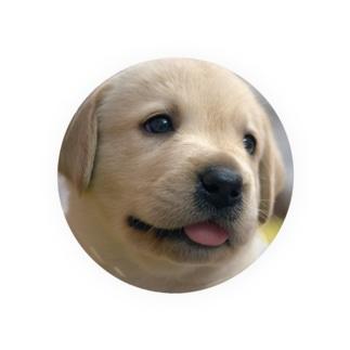 ラブラドール・レトリバーの子犬 Badges