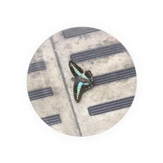 アオスジアゲハの死骸 Badges