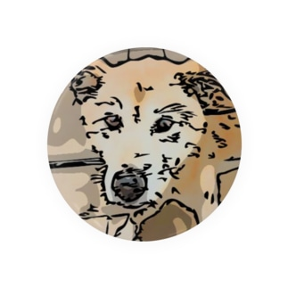 【保護犬/迷子犬】タロちゃん Badges