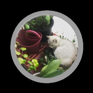 SHOP_KAGENEKOの観葉植物ぶっ潰し猫 Badges