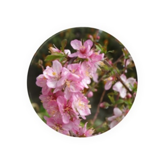 日本の花:ユスラウメ? Nanking cherry flowers (?) Badges