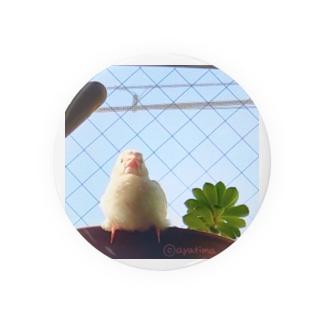 松砂丸商店の白文鳥のチマフミ Badges