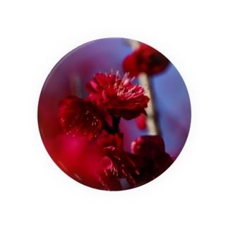 赤い梅(写真) Badges