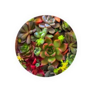 多肉植物たち。 Badges