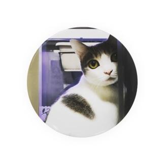 ふりむき猫 缶バッジ