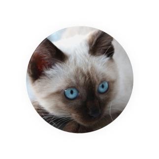 保護猫2013 なゆたくん Badges