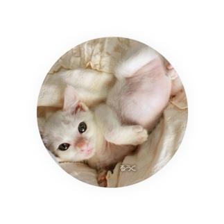 2011保護猫 るうく改め「チロルちゃん」 Badges