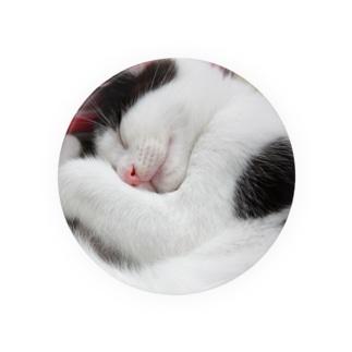 2012保護猫 うっしー改め「にこちゃん」 Badges
