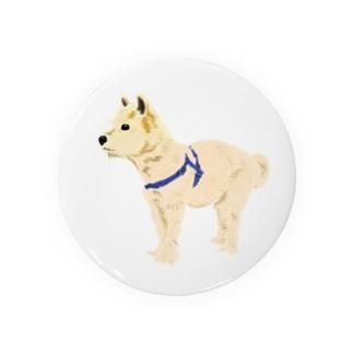 matsunomiの愛犬 Badges