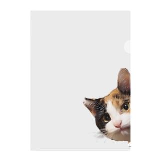 ひょっこりことりこ Clear File Folder