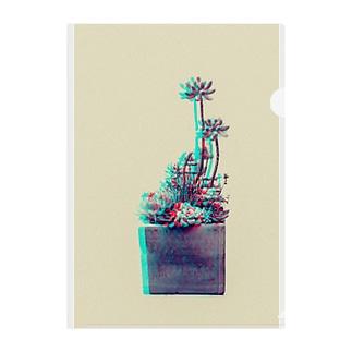 多肉植物 乙女心 スペクトル Clear File Folder