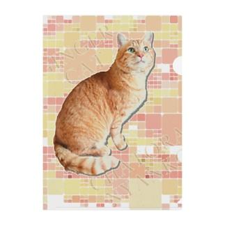 茶トラにゃんこ Gingercat 文字入り Clear File Folder