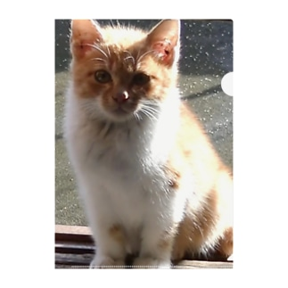 STEP IN猫さん2 Clear File Folder