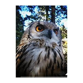 森の中のブー(カラーバージョン) Clear File Folder